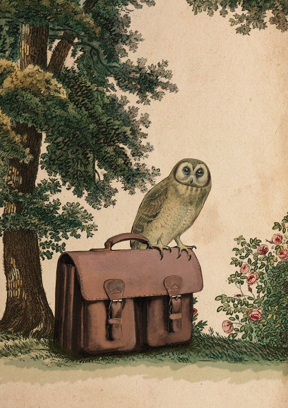 Illustration of an owl with a vegetable-tanned leather satchel.